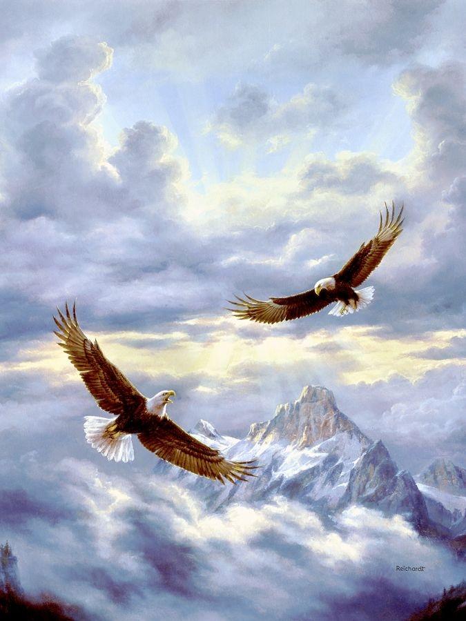 Картинки, открытка полет орла