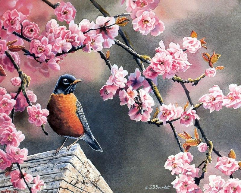 Как нарисовать сакуру и птиц